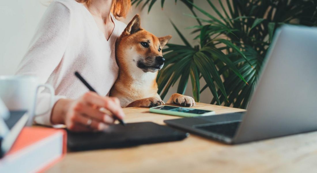 A woman wraps her arm around a shiba inu dog while working from home on a laptop and touchpad.