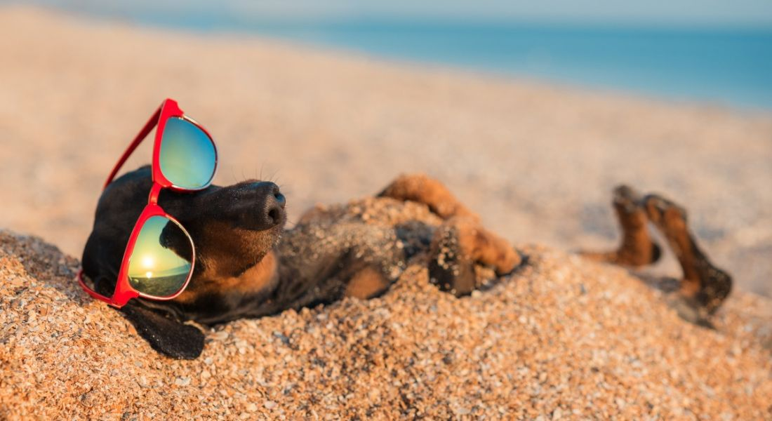 A dog wearing sunglasses while lying on its back in the sand on a beach, symbolising employees getting an extra week off.