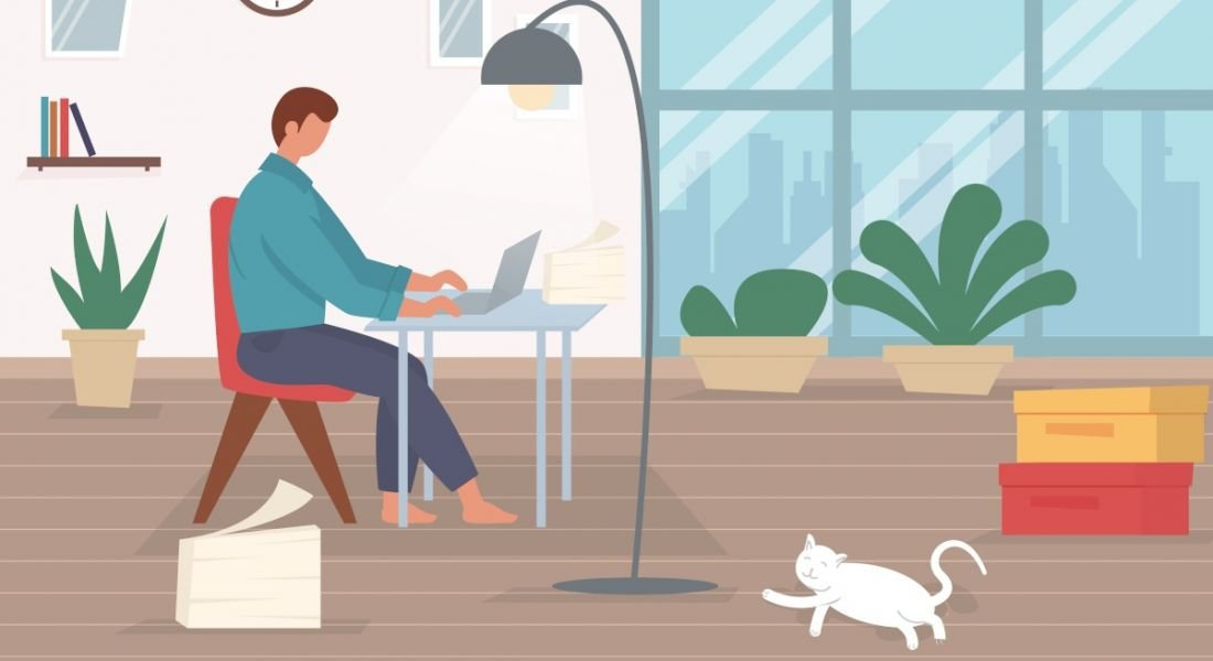 Person working from home at a desk with a laptop. In a living room with plants and shelving displaying personal ornaments. A lamp shines over the desk and a relaxed white cat lazes on the floor.