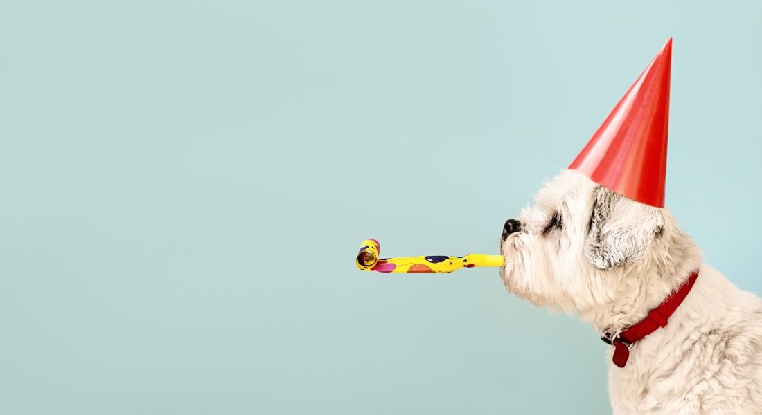 A dog is wearing a party hat and has a party streamer in its mouth.