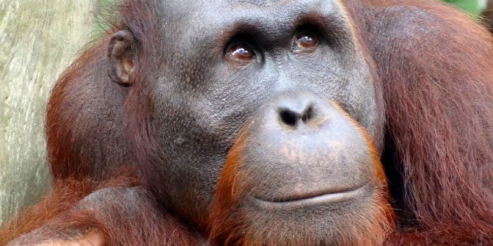 Dutch Zoo Creates 'Tinder...