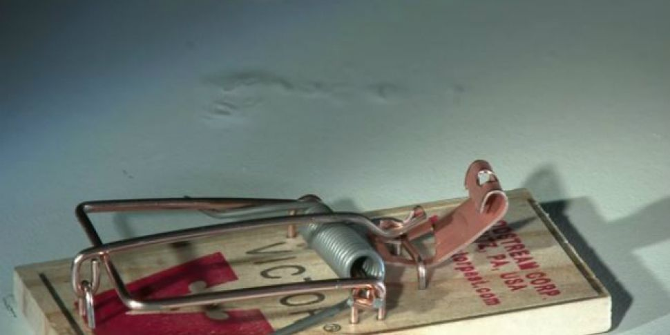 WATCH: Mouse Trap Vs A Hot Dog...