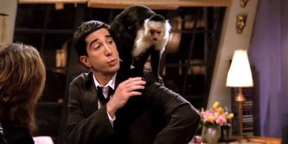 Image result for ross monkey