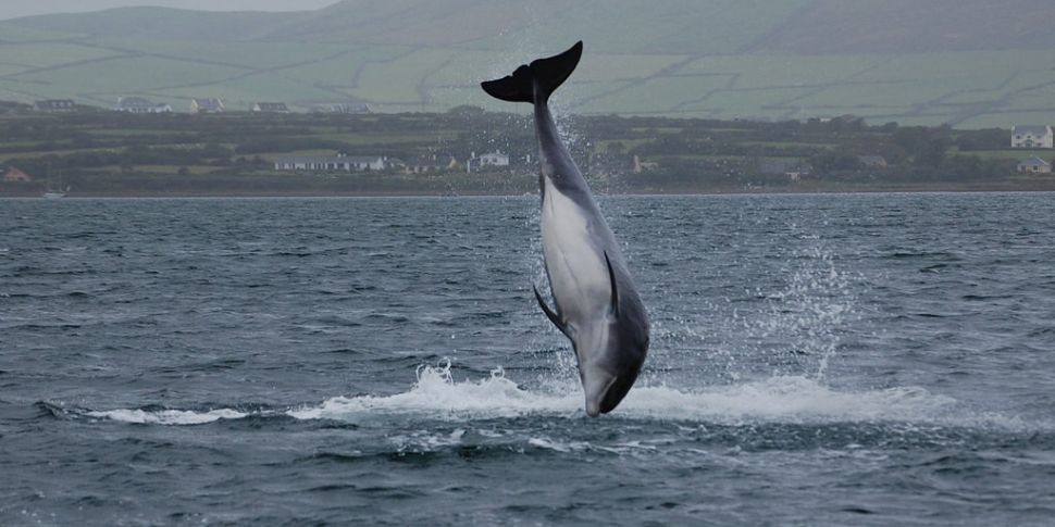 Concerns For Fungi The Dolphin...