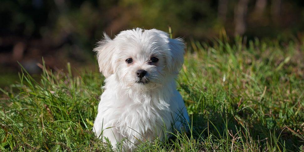 Cork City Dog Poo Wardens Goin...