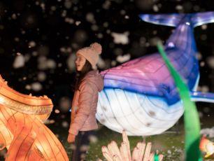 Wild Lights Returns To Dublin Zoo With An Ocean Theme