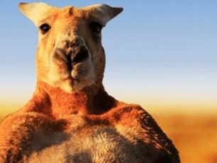 Roger 'The Ripped Kangaroo' Has Died In Australia