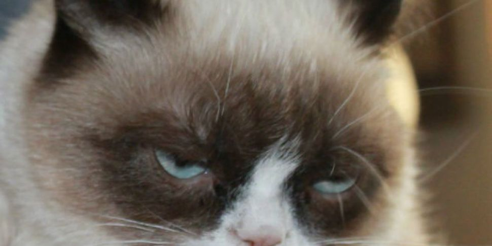 Grumpy Cat Given Reason To Smile With $710,000 Copyright Settlement