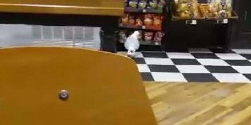 A Seagull Walks Into A Shop - Steals Bag Of Crisps