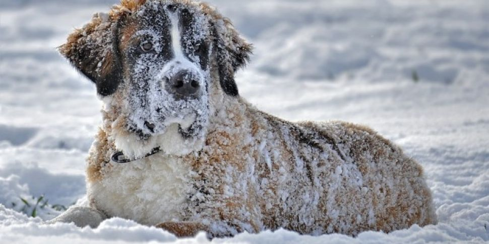 How To Take Care Of Your Pets During Storm Emma