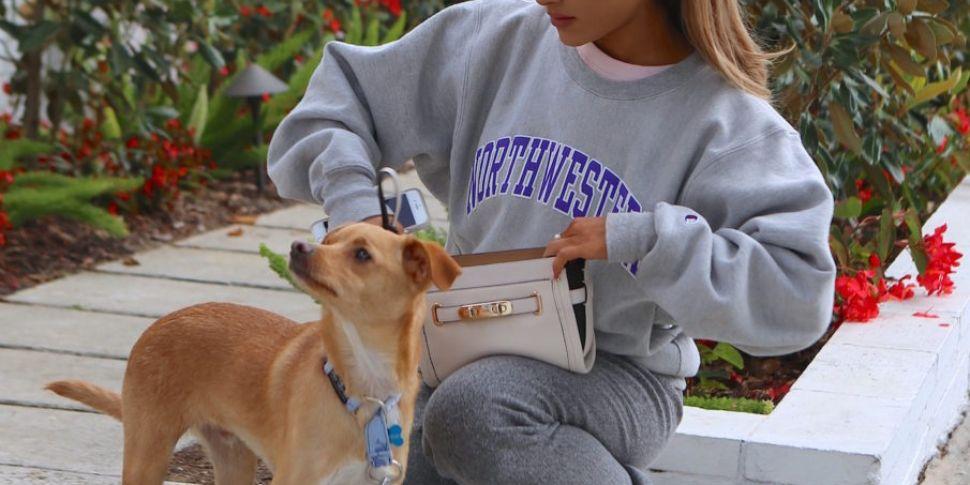 ALDI Are Selling Pet Advent Ca...