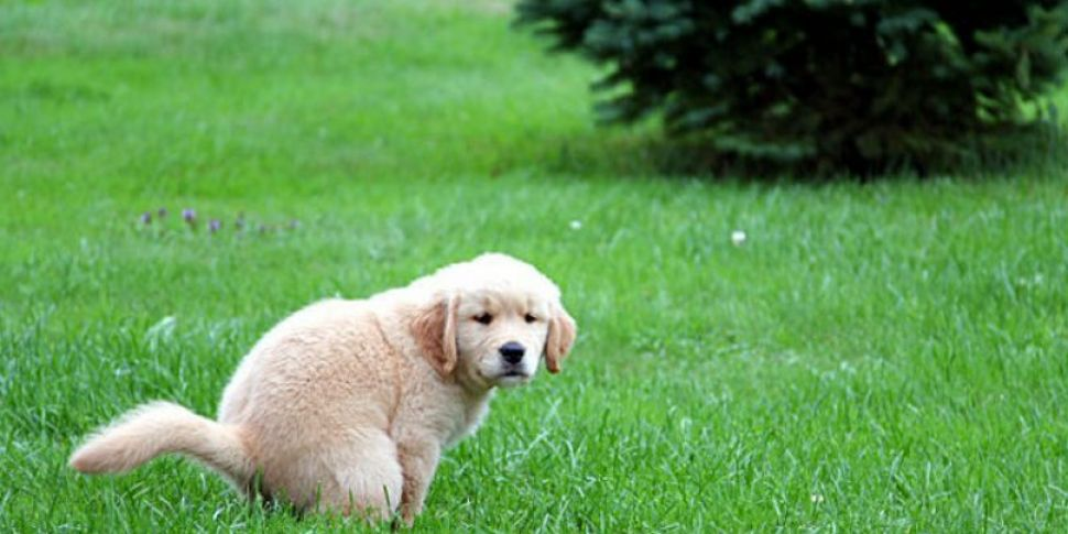 27% Increase In Dog Poo Compla...