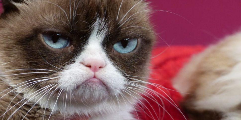 Internet Legend Grumpy Cat Has...