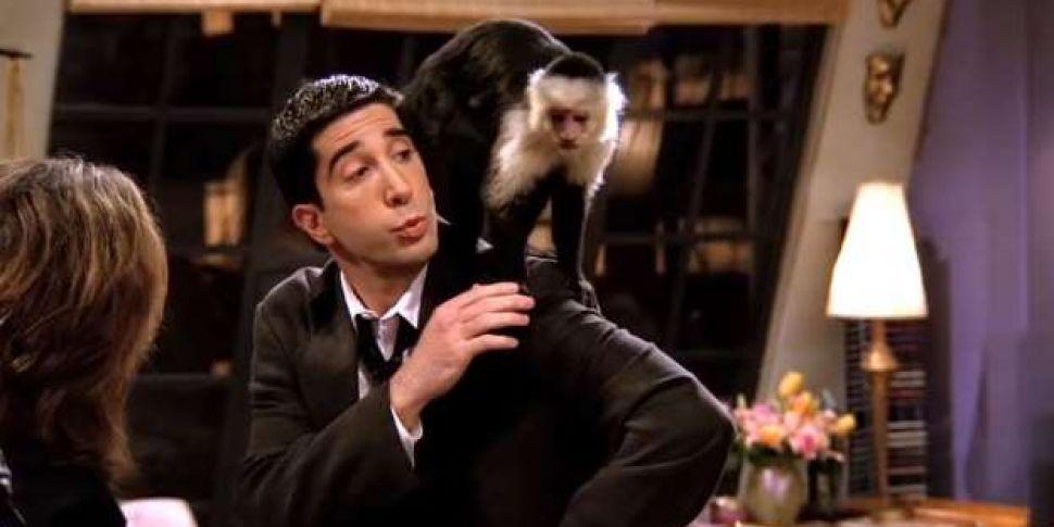 Ross Geller's Pet Monkey Marce...