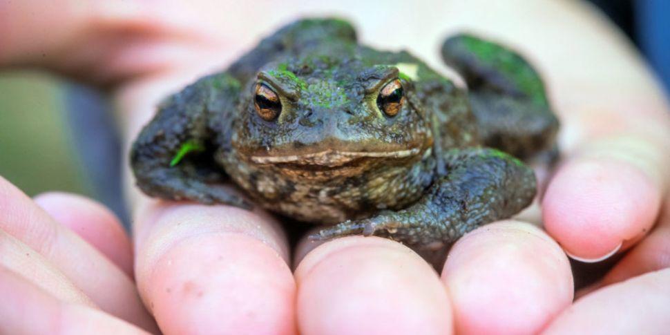 Ireland's First Wildlife Hospi...