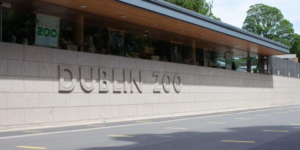 Dublin Zoo Is Re-Opening On Tu...