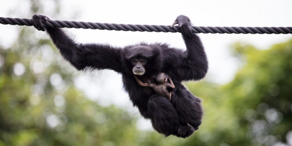 Dublin Zoo To Receive Governme...