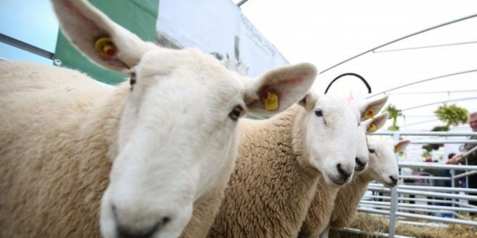 The National Ploughing Championships Is Going Ahead On Friday