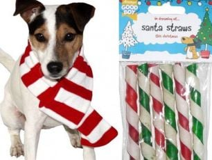 Christmas Present Ideas For Your Dog