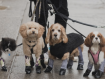 Dog Leggings Exist To Keep Your Dog Warm