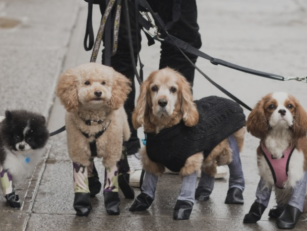 Dog Leggings Exist To Keep You...
