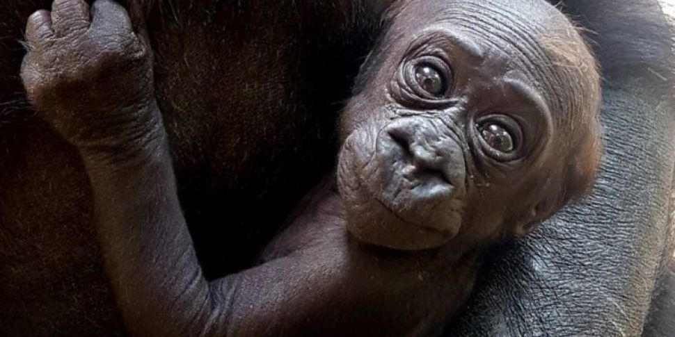 Dublin Zoo Need Help Naming Th...