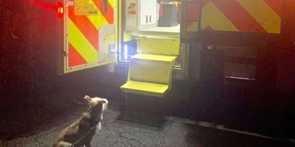 Gardaí Praise A Dog Called Jac...