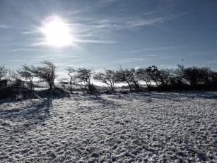 Met Éireann Predicts Lows of -...