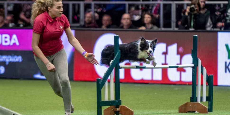 This Dog Loves Crufts More Tha...