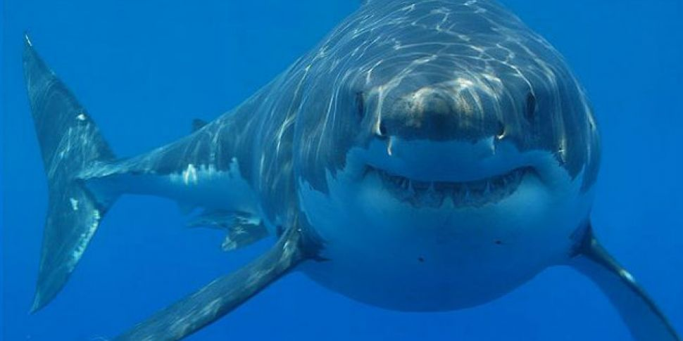 Jaws Could Be In Irish Waters...
