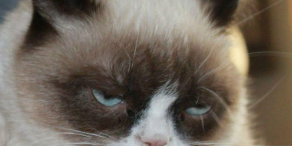 Grumpy Cat Given Reason To Smi...