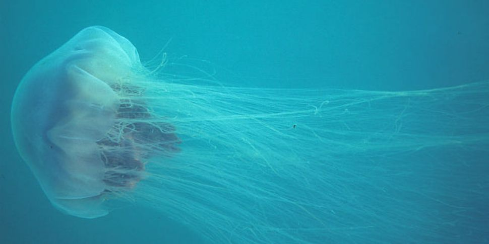 Jellyfish Stings Have Put 5 People In Irish Hospitals This Summer