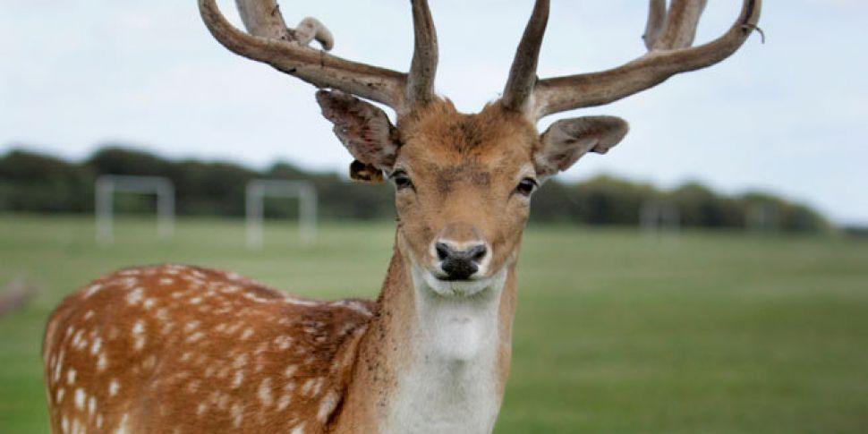 Over 200 Deer Killed By Sniper...