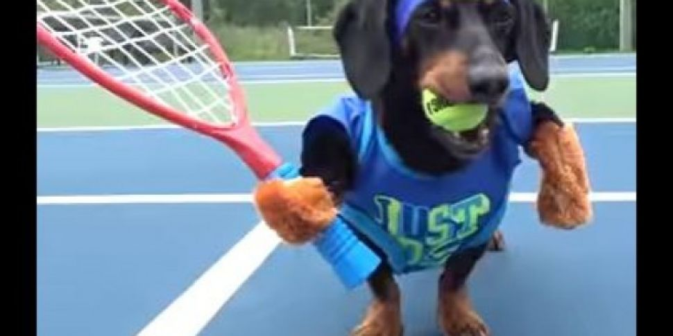 These Dogs Playing Tennis Is T...