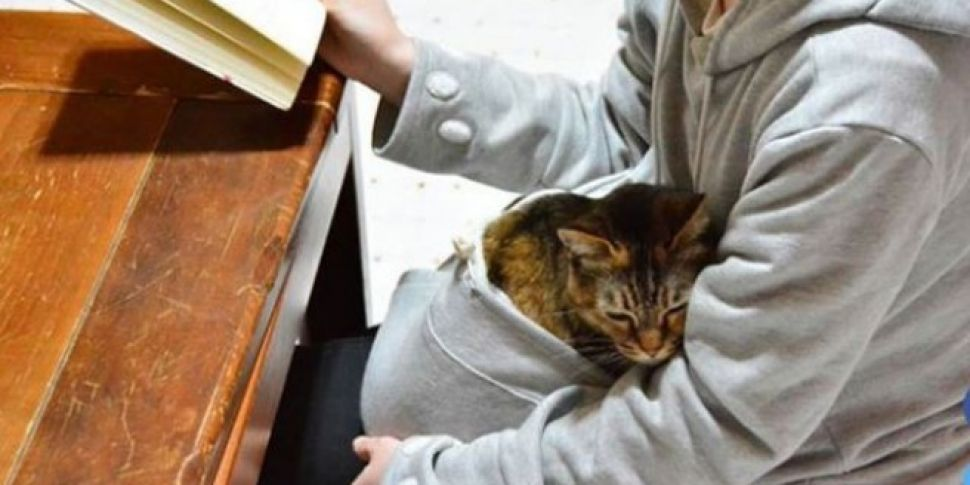 You Can Now Get A Hoodie With A Pouch For Your Cat
