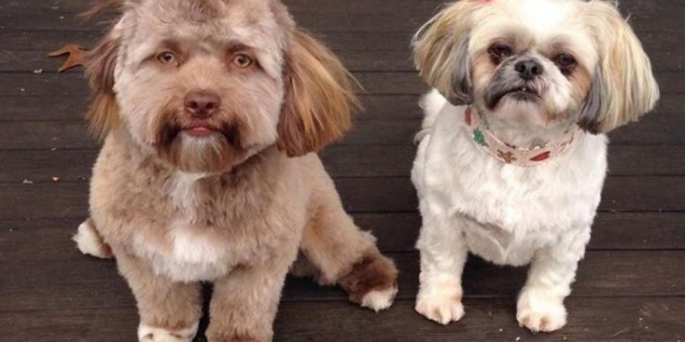Cute Or Creepy, The Dog With A Human-Like Face