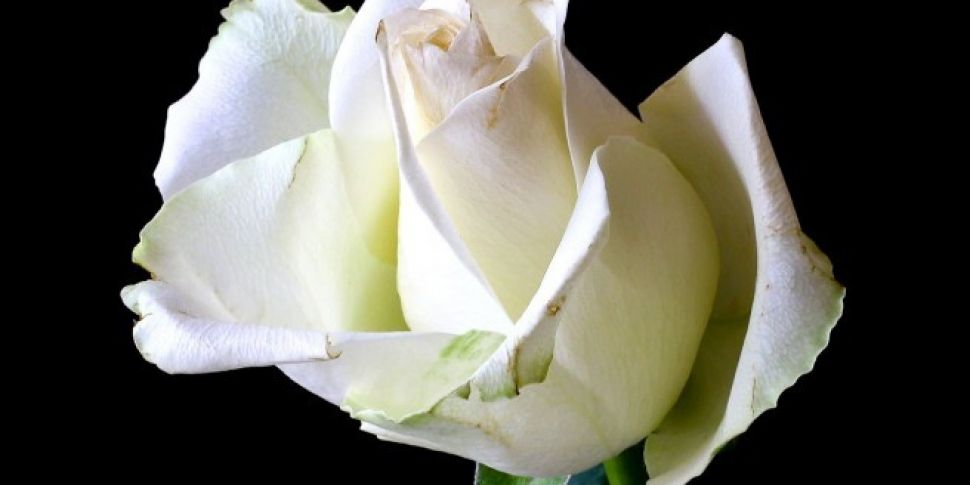Artists Set To Wear White Rose...
