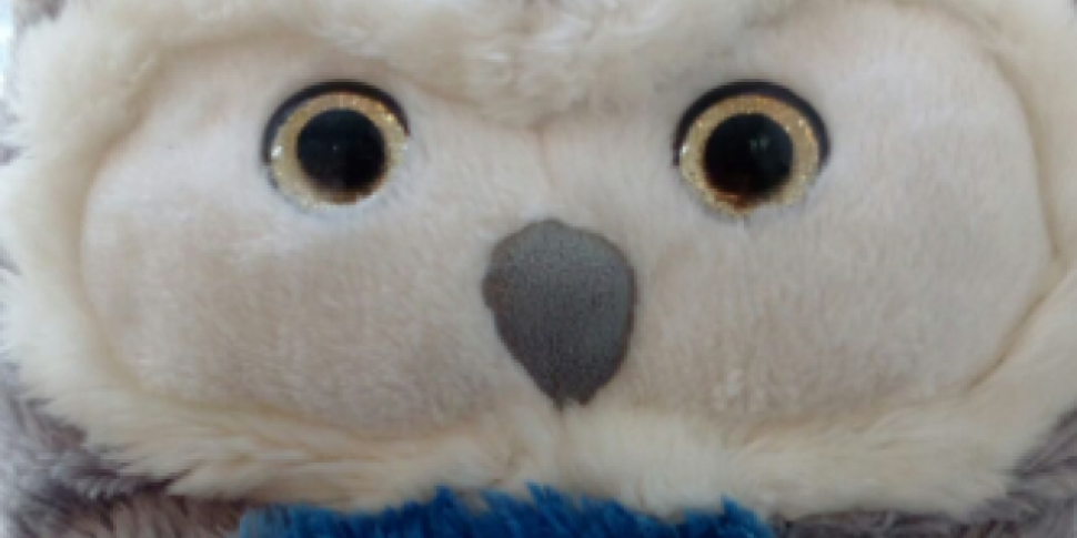 Toy Owl Left Behind At Crumlin...