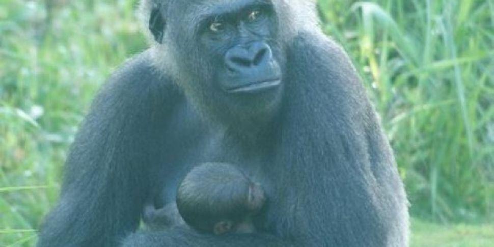 American Zoo Throws Gender Rev...