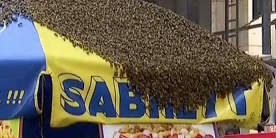 A Swarm Of Bees Took Over A Times Square Hot-Dog Stand