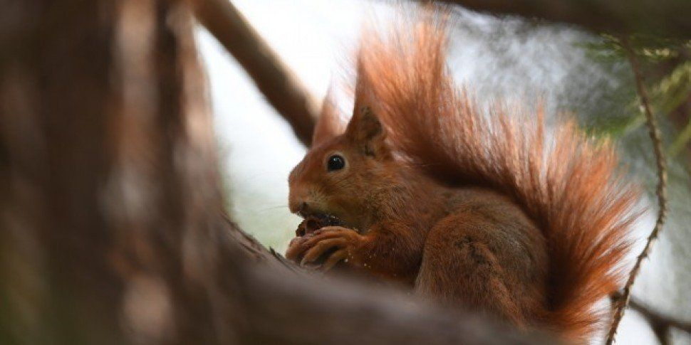 US Flight Delayed After Woman Tried To Bring Pet Squirrel On Board