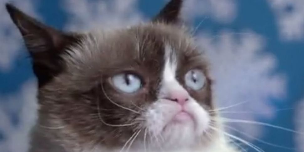 TRAILER: Grumpy Cat - The Movi...