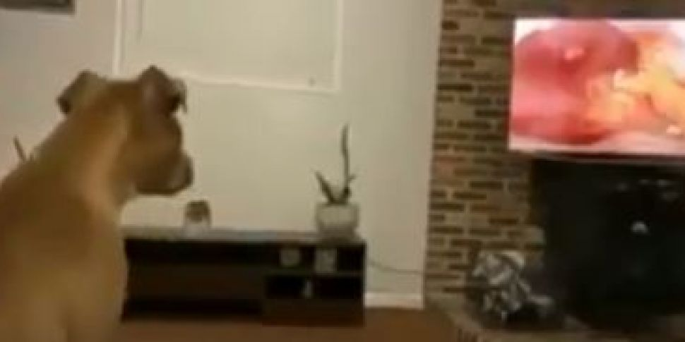 This Dog's Pure Reaction To Th...