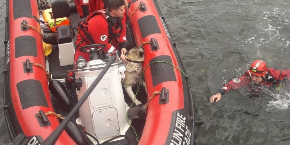 Two People, A Dog, Rescued fro...