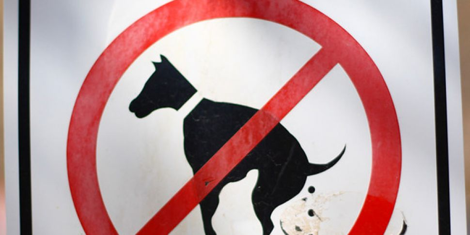 1,654 Fines Issued To Dog Owne...