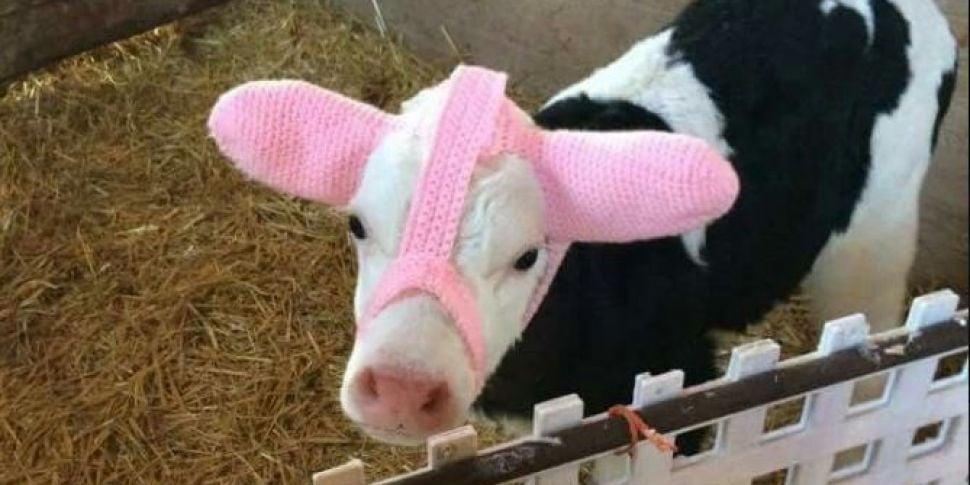 An Irish Farmer Has Discovered...
