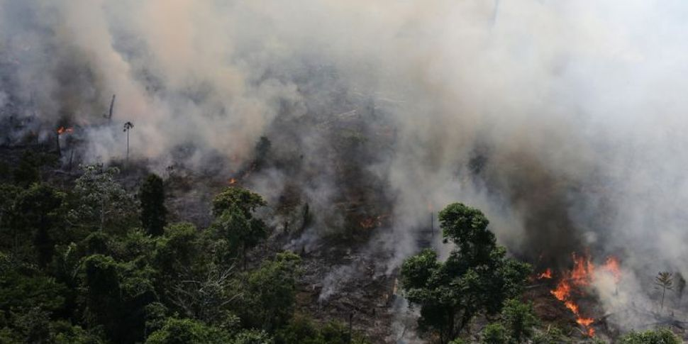 Why The Amazon Rainforest Fire...