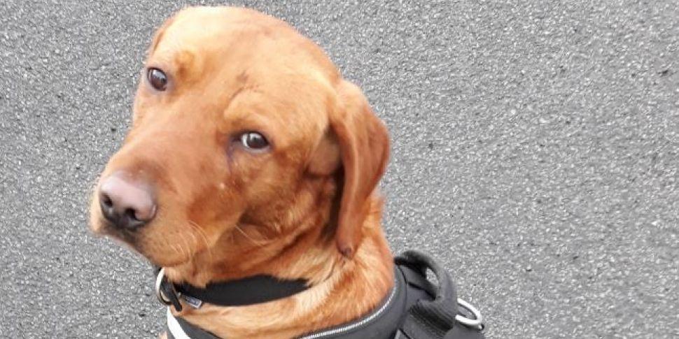 Detector Dog Helps Revenue Mak...