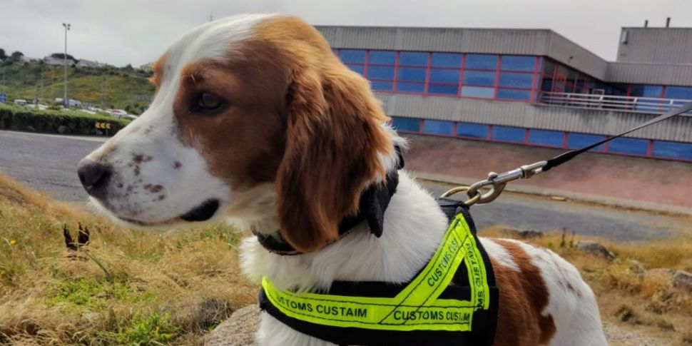 Detector Dog Gus Helps Uncover...