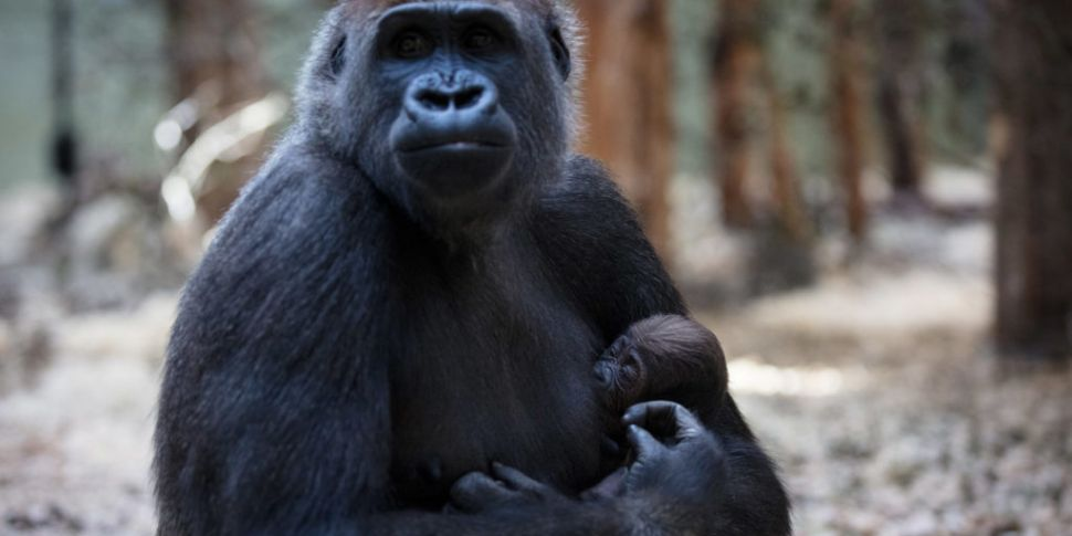 Govt To Help Dublin Zoo & Fota...